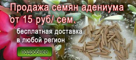 где купить семена адениумов
