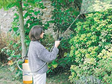 опрыскивание деревьев весной бордоской жидкостью