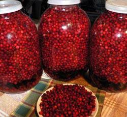 ягоды брусники как мочегонное средство
