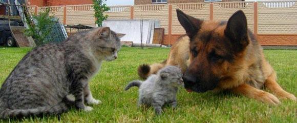 как отвадить кошек от огорода