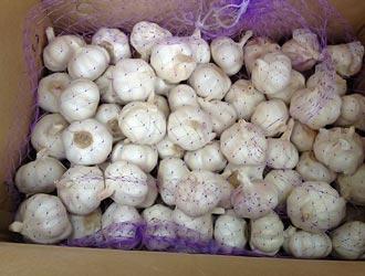 хранение чеснока в коробках