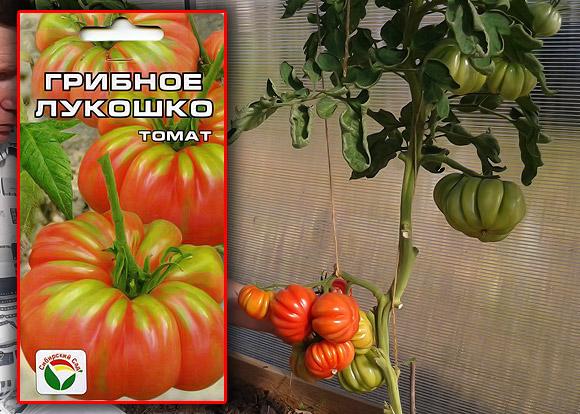 Сорт индетерминантных томатов Грибное лукошко