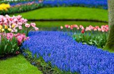 Синий сад