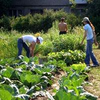 чем заняться в сентябре на огороде