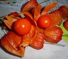 фото ягодного физалиса
