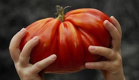 как вырасти крупные помидоры