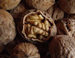 выращивание грецкого ореха из семян