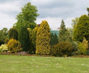 золотой сад из хвойных растений