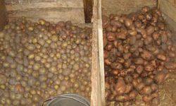 как хранить картофель в гараже