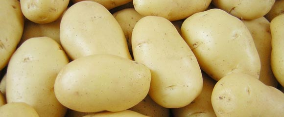 какой сорт картофеля лучше