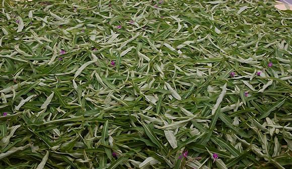 выкладывают листья кипрея в один слой
