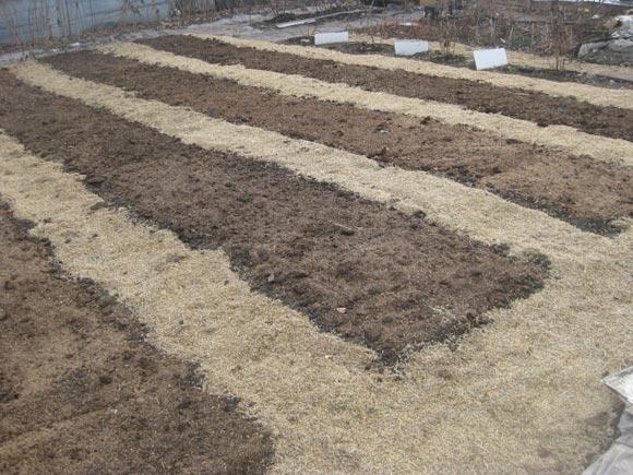 грядки для посадки клубники осенью