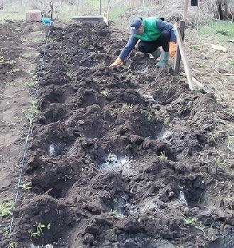 удобрения для клубники при посадке осенью
