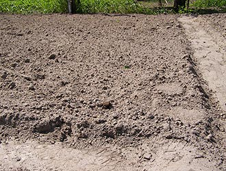почва для посадки ремонтантной клубники осенью