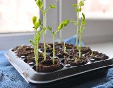 как вырастить дома кресс салат