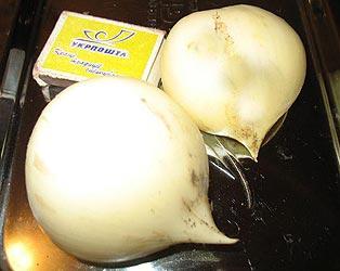 выращивание лука анзура из луковицы