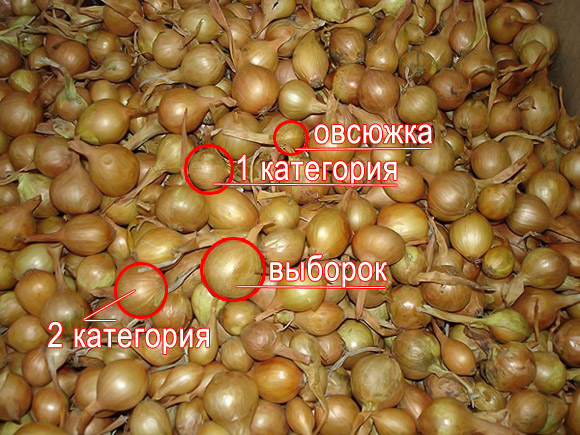 luk-sevok3
