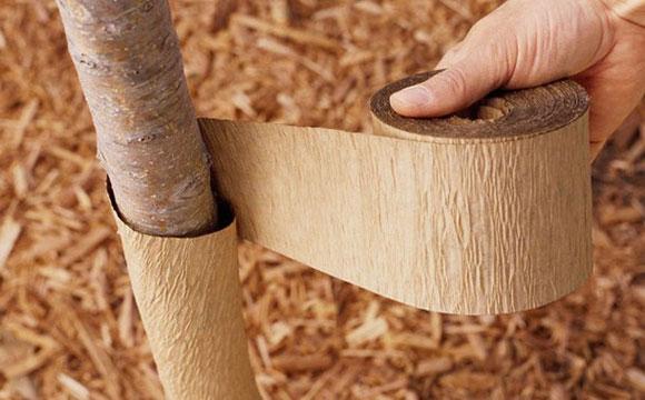 Стволы деревьев защищают от прожорливых грызунов обертыванием берестой