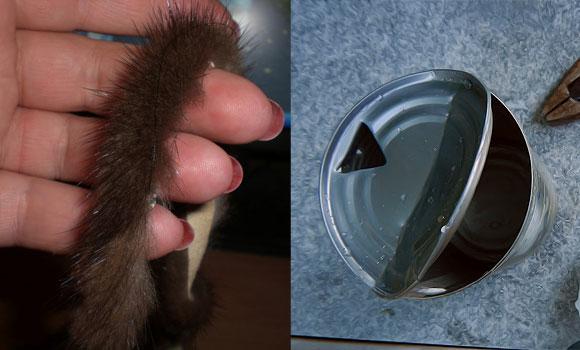 Сжечь кусочек меха в жестяной банке от мышей