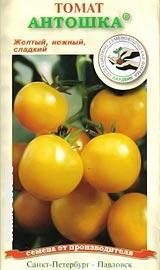 Лучшие сорта низкорослых помидор для открытого грунта Антошка
