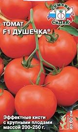 Лучший сорт низкорослых помидор для открытого грунта Душечка