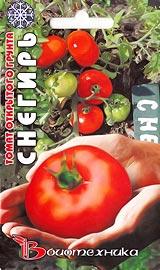 Лучшие сорта низкорослых помидор для открытого грунта Снегирь