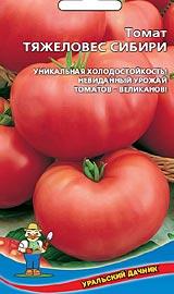 Лучший сорт низкорослых помидор для открытого грунта Тяжеловес Сибири