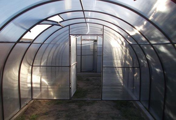 как выращивать огурцы и помидоры в одной теплице