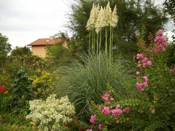 Пампасная трава в дизайне