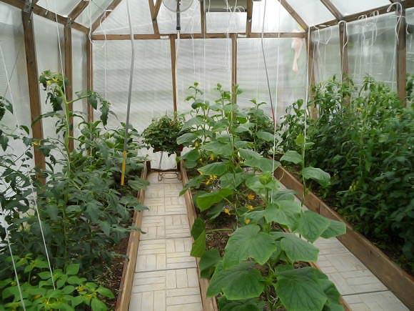 Посадка со значительным расстоянием между растениями