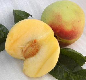 сорт персика Белый Лебедь