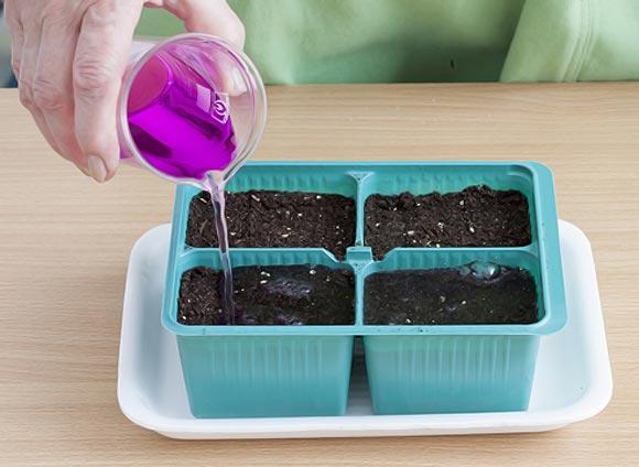 обработка почвы марганцовкой перед пересадкой рассады помидо
