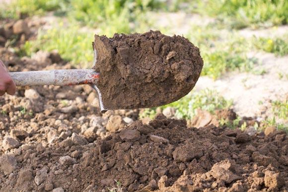 почва для томатов