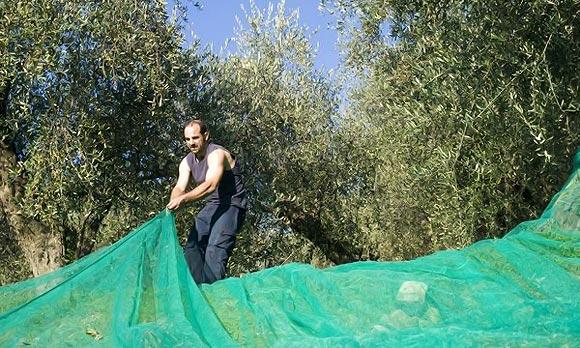 затеняем помидоры от ветра и солнца