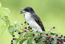 как отпугивать птиц с огорода