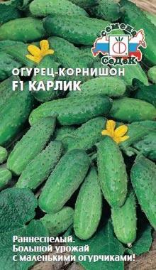 пучковые огурцы сорт Карлик