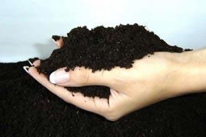Второй состав грунта для рассады томатов: дерновая земля, торф и перегной.