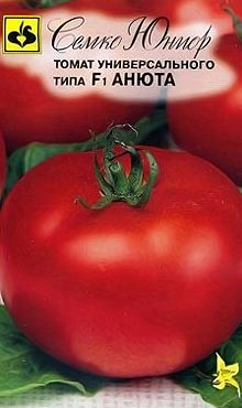 Полудетерминантный сорт самоопыляемых томатов Анюта