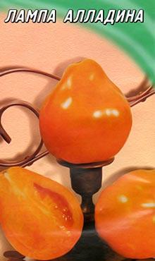 Среднеплодный сорт самоопыляемых томатов Лампа Алладина