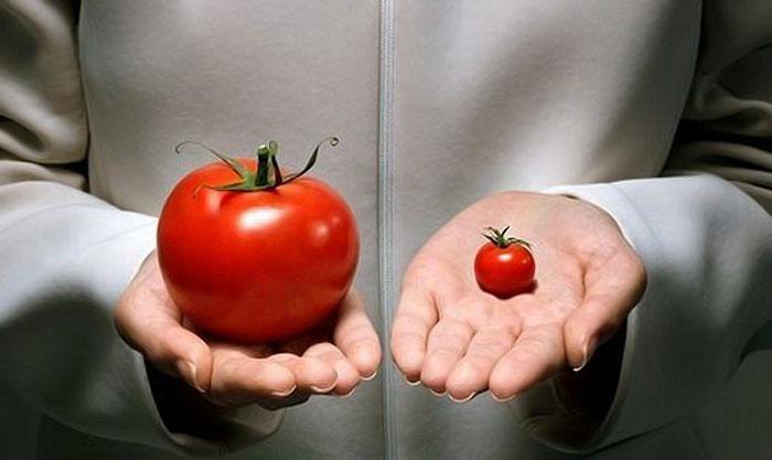 пересортица в семенах томатов