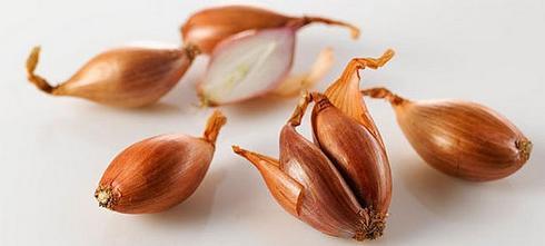 размножения луковиц шалота