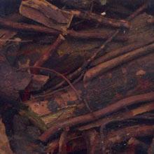 корни шиповника полезные свойства
