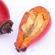 семена шиповника полезные свойства