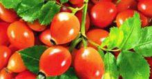 ягоды шиповника полезные свойства