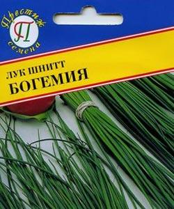 лук шнитт выращивание из семян