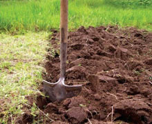 как уничтожить сорняки в огороде