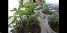 видео о садоводстве