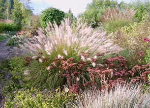 злаковые растения для сада
